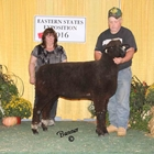 Champion Natural Colored Ewe
