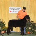 Best Fleece and Reserve Champion Natural Colored Ram