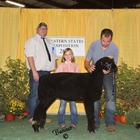 Junior Show Reserve Champion Natural Colored Ewe