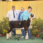 Reserve Champion Natural Colored Ewe