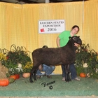 Reserve Champion Natural Colored Border Leicester Ram