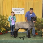 Junior Show Reserve Champion Natural Colored Lincoln Ewe