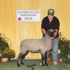 Reserve Champion Natural Colored Lincoln Ewe and Best Fleece Natural Colored Lincoln