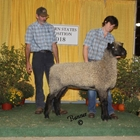 Reserve Champion Natural Colored Lincoln Ewe