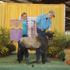 Reserve Champion Natural Colored Lincoln Ram