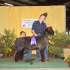 Champion Natural Colored Romney Ewe and Best Fleece Natural Colored Romney