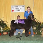 Reserve Champion Natural Colored Romney Ram