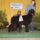 Junior Show Reserve Champion Natural Colored Romney Ram