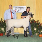 Supreme Oxford and Champion Oxford Ewe