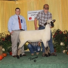 Reserve Champion Oxford Ewe