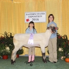 Junior Show Reserve Champion Oxford Ram