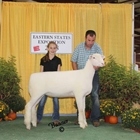 Junior Show Reserve Champion Dorset Ewe