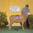 Champion Rambouillet Ewe and Best Fleece