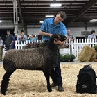 Senior Showmanship Winner
