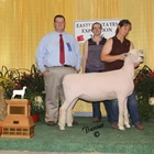 Supreme Southdown and Champion Southdown Ewe