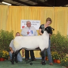 Reserve Champion Fitted Suffolk Ewe