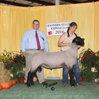 Reserve Champion Suffolk Ram