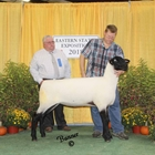 Supreme Suffolk, Overall Champion Ewe, and Champion Fitted Ewe