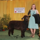 Reserve Champion Overall and 1st Place Junior
