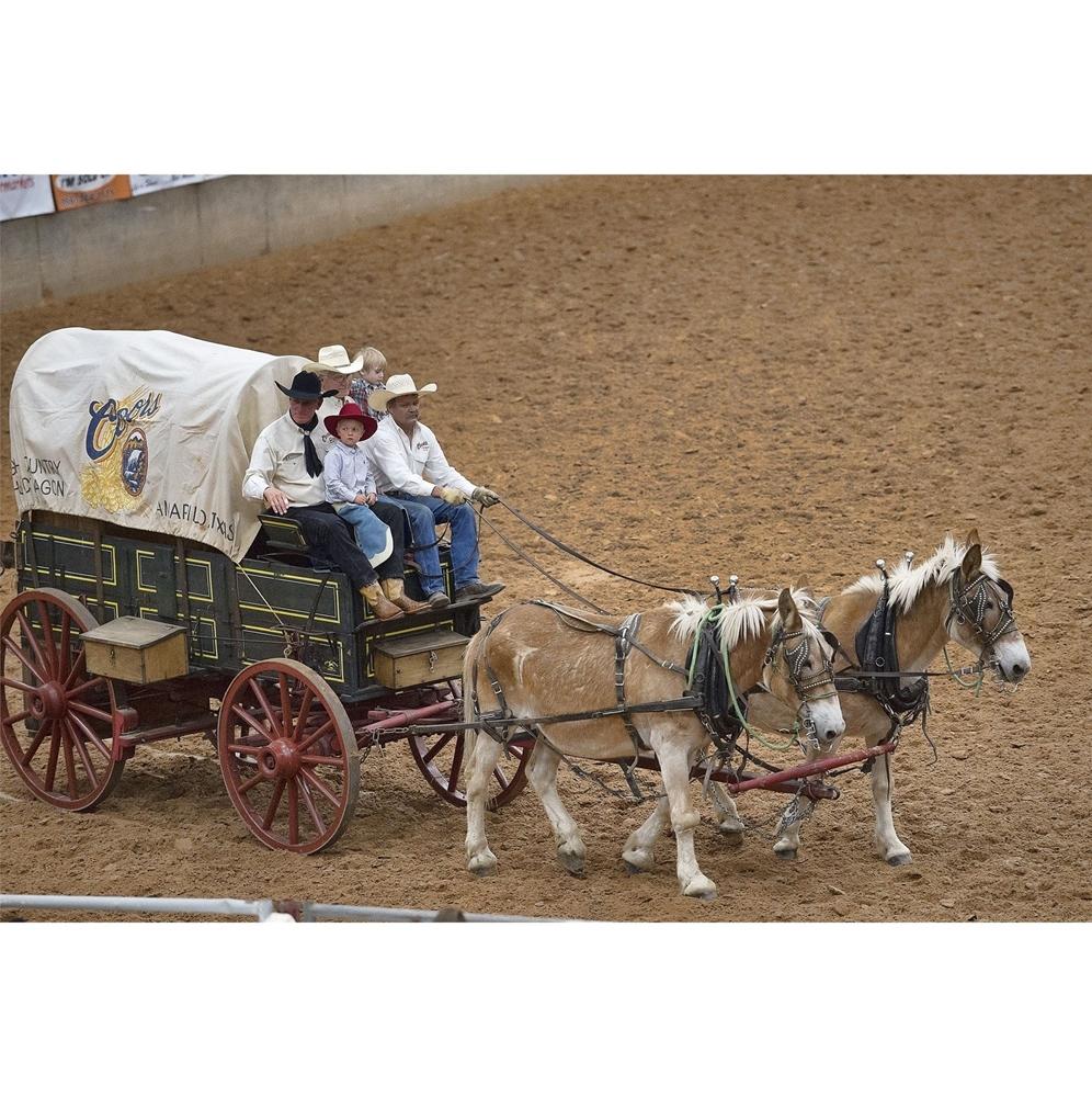 two mules, chuck wagon, muleskinners