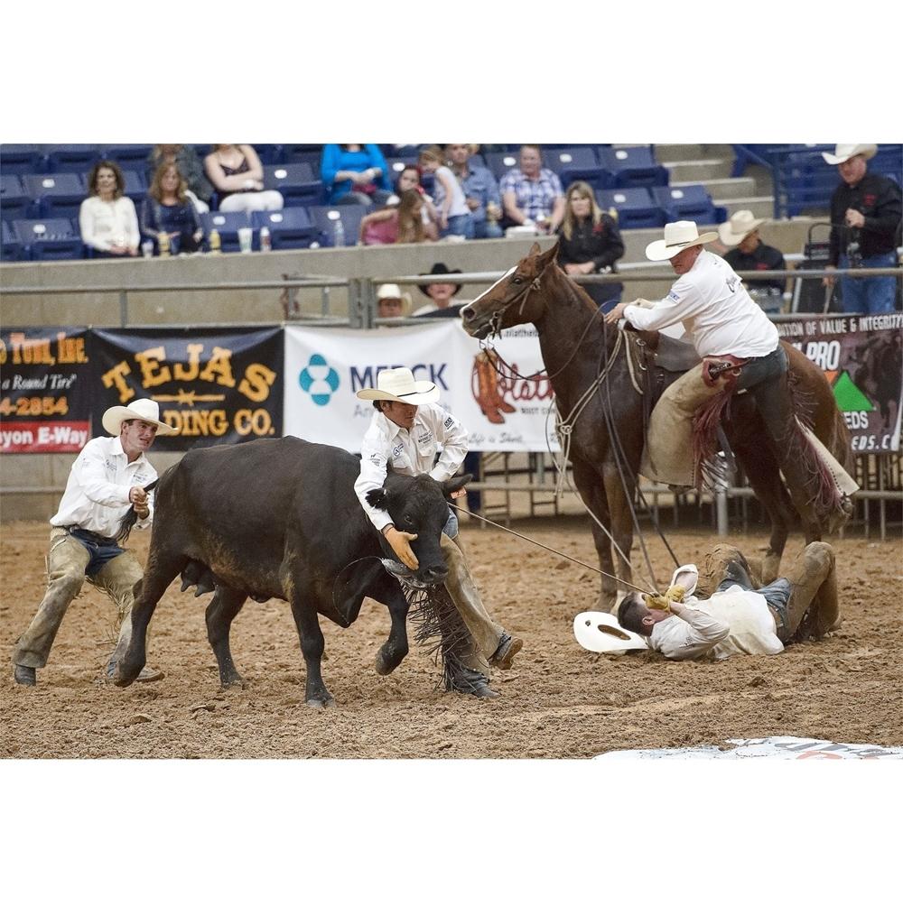 cowboys, black cow, wild cow milking, horse