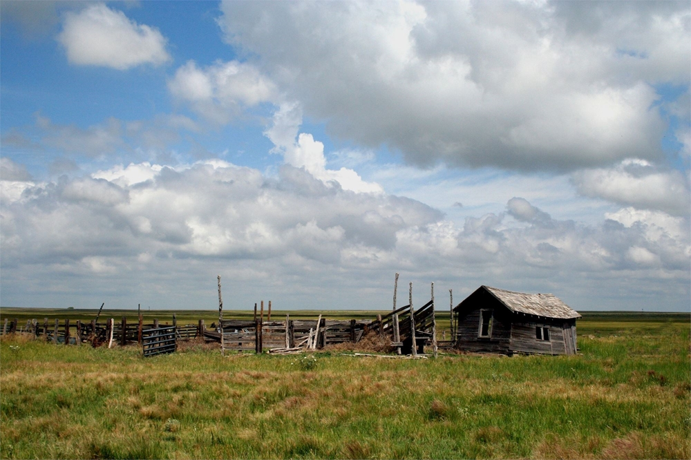 Home on the Range. Photo of old saddle house and cattle loading chute on the Nobles Place in north Dallam county Texas.