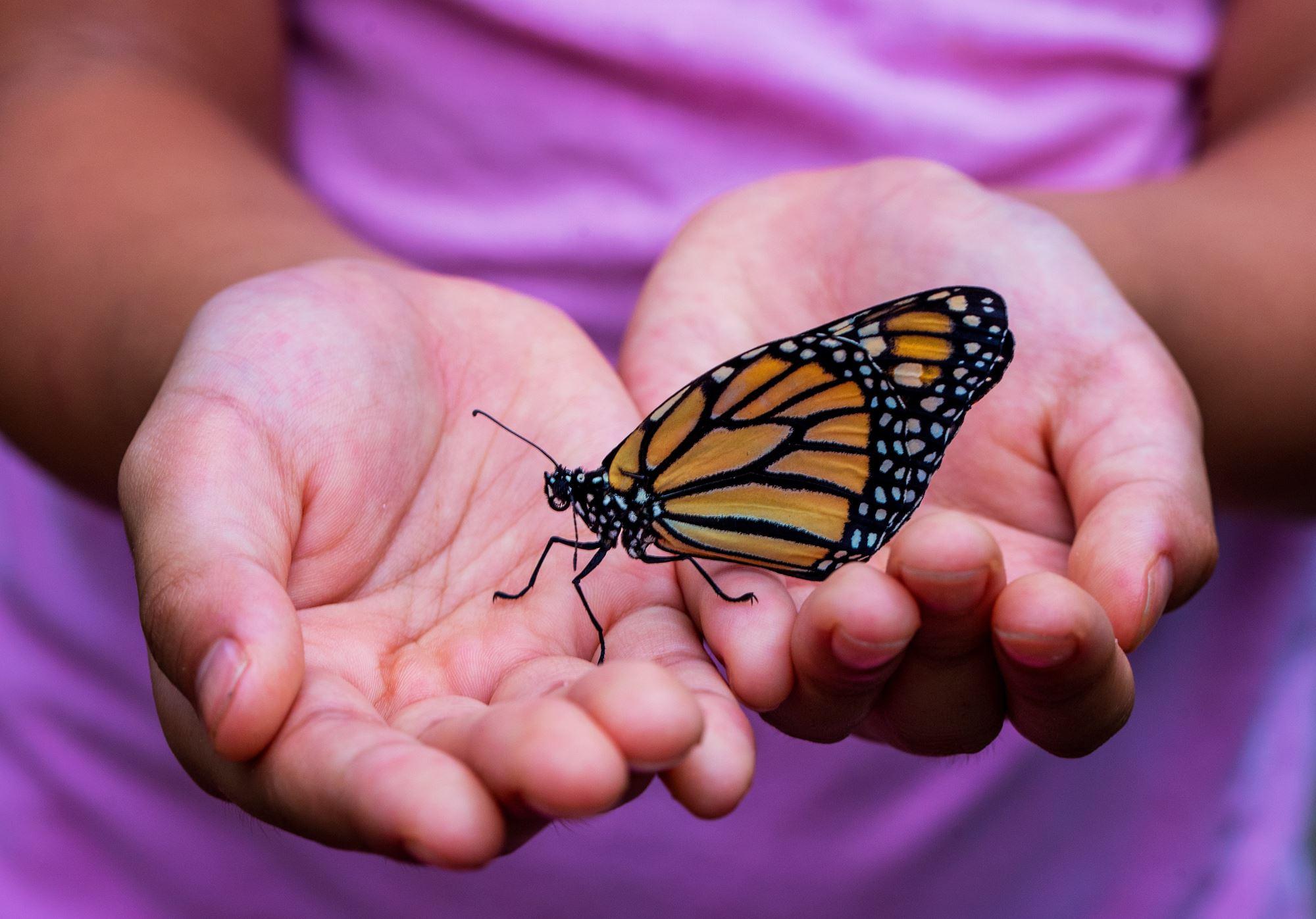 Monarch Butterfly Exhibit