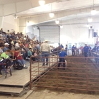 4-H Market Animal Sale