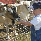 Randy's Freckle Farm and Wacky Turkey Races