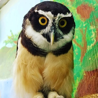 Owl at the Santa Ana Zoo