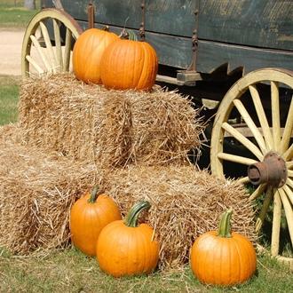 Pumpkins on hay barrels in front of a wagon at Tanaka Farms