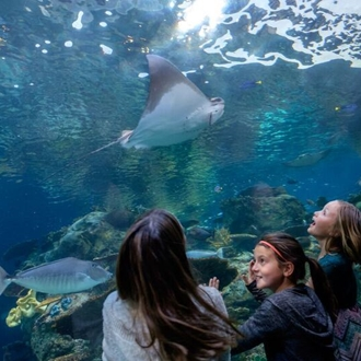 Children looking at sting rays in a large aquarium at the Aquarium of the Pacific