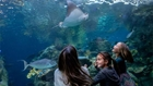 Children looking at sea creatures at the Aquarium of the Pacific