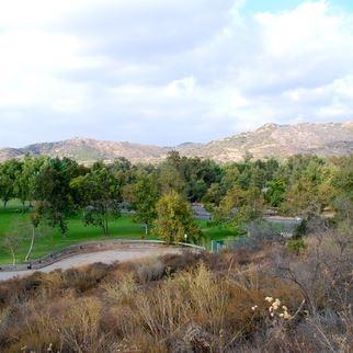 Trees at Irvine Regional Park