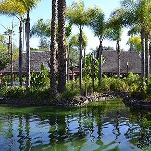 Lagoon with palm trees at Knott's Berry Farm Lagoon in Buena Park
