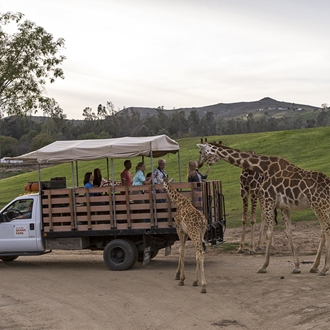 Attendees feeding giraffe food at San Diego Zoo Safari Park