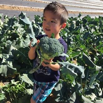 Child holding broccoli at Tanaka Farms