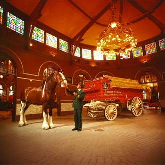 Budweiser Clydesdale Stable & Hitch Show