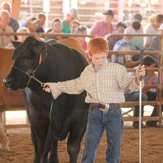 Exhibits & Livestock