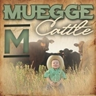 Muegge Cattle