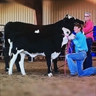 Open Jr. Heifer & Steer Show