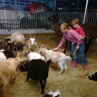children s petting zoo pony rides opens