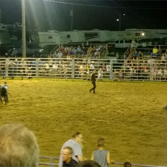 Wild Steer Saddling Contest
