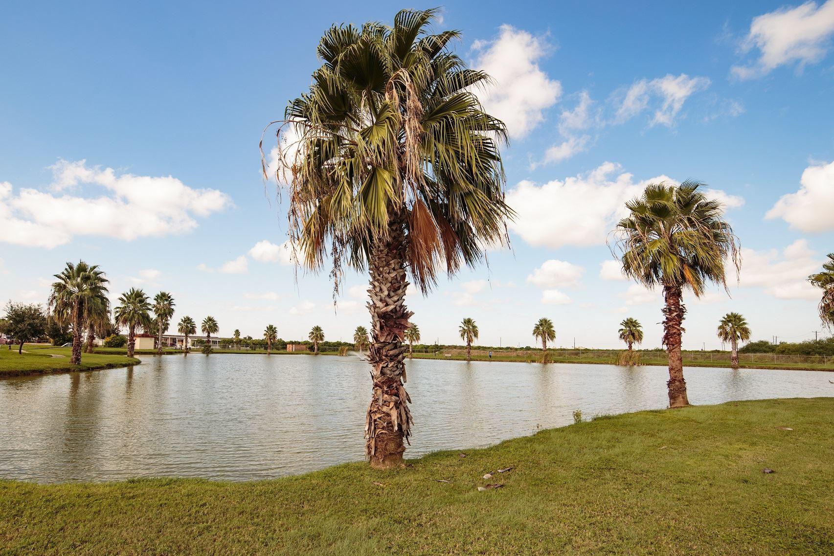 Dog Park & Lake