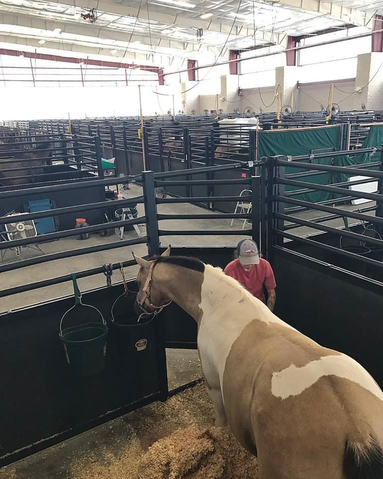 Temporary Horse Stalls
