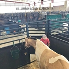 Temporary stall setup in the Covered Expo. Paint horse and their owner in the bottom right