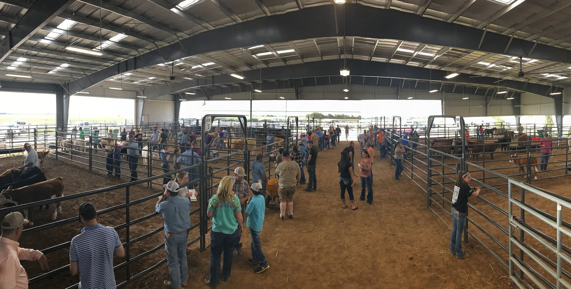 Covered warmup arena with cattle pins set up for a cattle action. People looking at cattle through fence