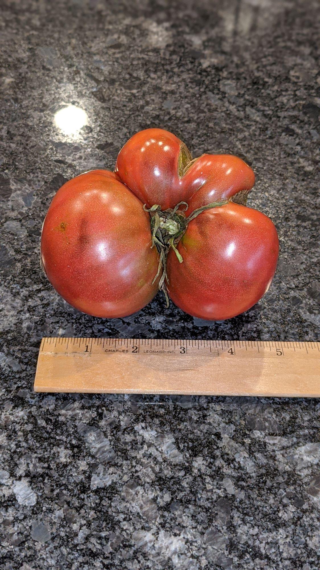 Largest tomato