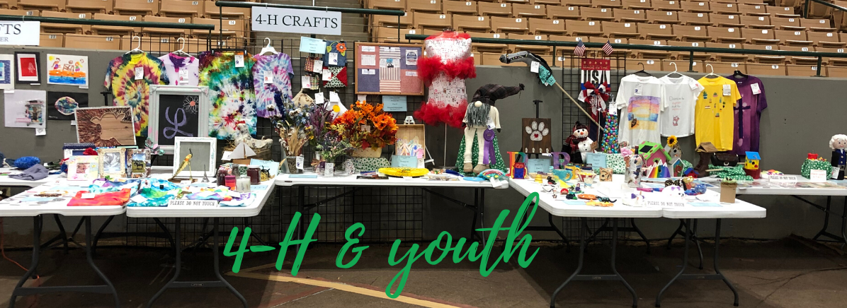 A variety of entries in the 4-H & Youth divisions