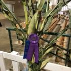 Best of Show Field Crops